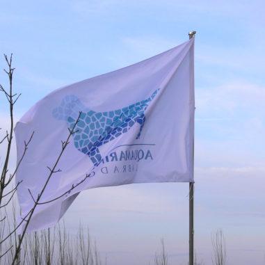 aquamarine-wave-labradors-retriever-10